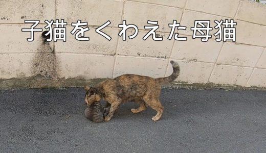 猫島 かわいい子猫に壁越えを教える母猫【地域猫】【野良猫】