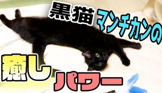ペットショップの売れ残り猫の癒し効果が凄まじすぎる