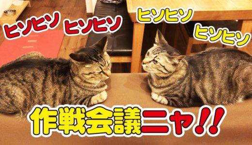 兄弟猫が向い合ってなにやらひそひそ話!?