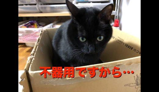 【不器用な黒ネコ】ココ師匠に薬を投与するのです。Medicine administration to the dangerous black cat COCO [English subtitles]
