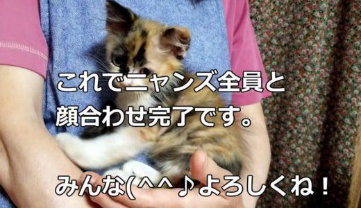 【先住猫と子猫の初対面】猫同士で気まずい空間!ゆずりん家族は女帝が強い!Yuzurin family has a strong empress!