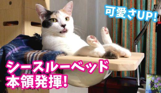 シースルーベッドを使いこなす猫が可愛すぎたw