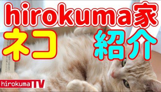 【猫動画】hirokuma家のネコ紹介#2(アメリカンショートヘア)