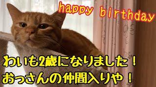 猫のきんた、2歳の誕生日!!