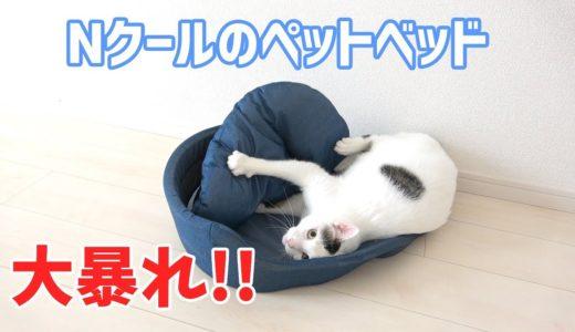 Nクールのペットベッドの使い方がおかしすぎる猫