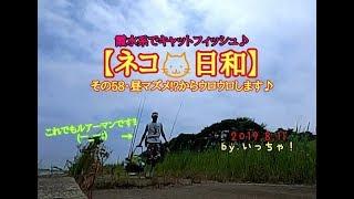 【ネコ🐱日和】その58・2019.8.11.霞水系でキャットフィッシュ♪昼マズメ!?からウロウロします♪