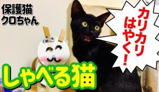 【保護猫】しゃべる猫 クロちゃん Talking cat Kuro-chan