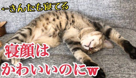 寝顔のかわいさと寝起きの不細工顔にギャップ萌えな猫w