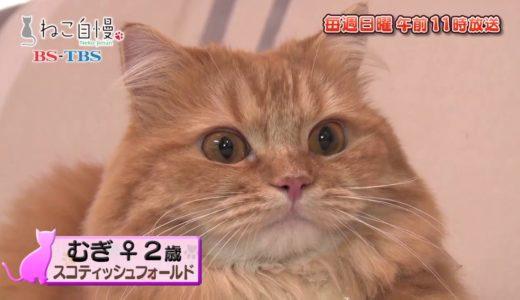 ねこ自慢#11ご出演ニャンコたち【8月18日OA】