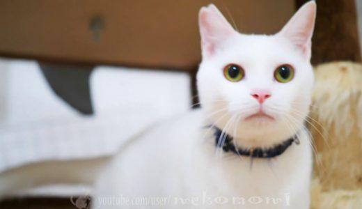 CAT vs LEICA DG VARIO-SUMMILUX 10-25mm / F1.7 ASPH. ねこもん猫よいちろびん