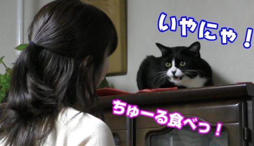 ちゅーるを食べた!なつかない猫ハウルを飼い主が説得した結果How to get along with a ferocious cat