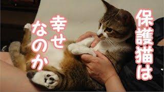 猫に我が家にやってきて幸せなのかを聞いてみたら猫は何て答えたのか?!