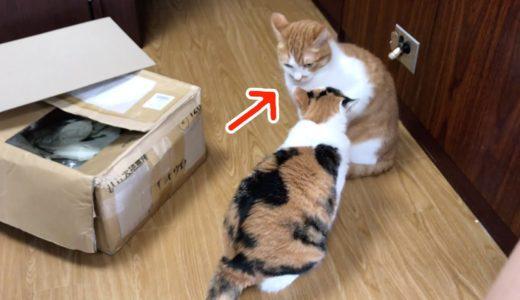 まるでレスリングの様な喧嘩をする猫!