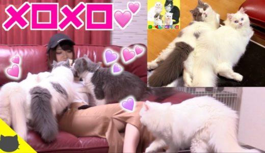 4匹の可愛い猫達を従えるつもりが、カオスな状況に!?【まーくんとコバと猫コラボ】