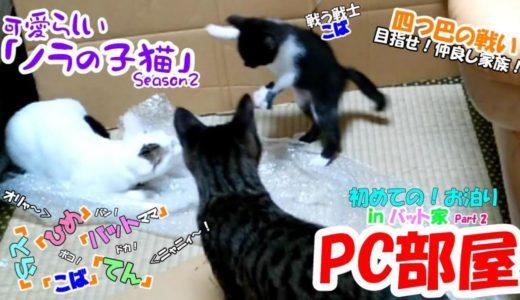 可愛らしい「ノラの子猫」Season2 #12 一か月半の赤ちゃんネコ!先住ネコには負けない!