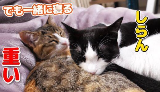 飼い主に寄り添って仲良く甘えてくれる姉妹猫
