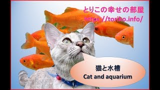 猫と水槽 Cat and aquarium