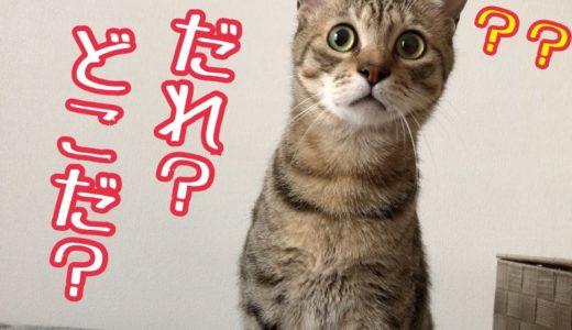 犬の鳴き声を聞いた猫たちの反応がかわいすぎたw