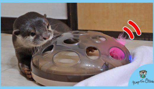 カワウソビンゴ動く猫用おもちゃだと?Otter Bingo: Mom, this cat can move!
