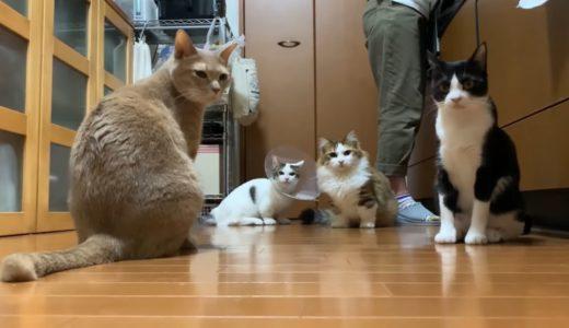 おやつで大合唱になる猫たちがかわいい