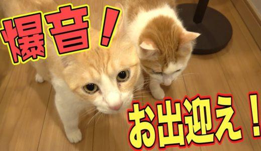 【大音量】2日ぶりに帰宅すると猫の出迎えボイスの音量がMAXになります。
