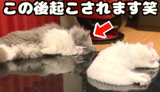 子猫に寝込みを襲われた親猫の対応が意外過ぎた...!!