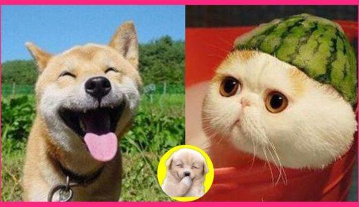 💗犬好き🐶猫好き😻動物好き必見!かわいくて面白い😁動物たち~心が癒される動画~