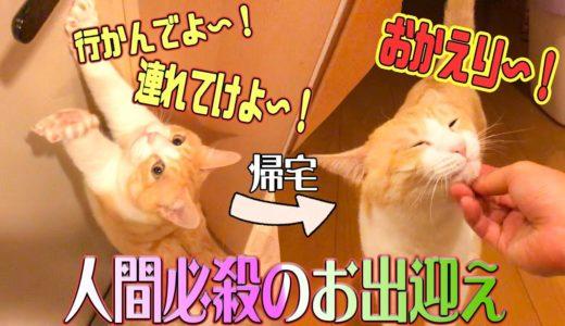 【お出迎え】飼い主の外出を阻止する猫!その飼い主が帰ってくると…?