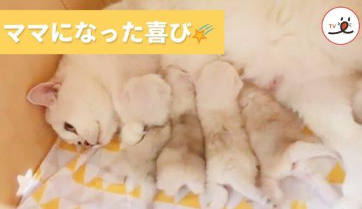 新米ママ猫、子猫たちのために安心できる場所を探し、お乳をあげて…子育てに奮闘中☺️💓【PECO TV】