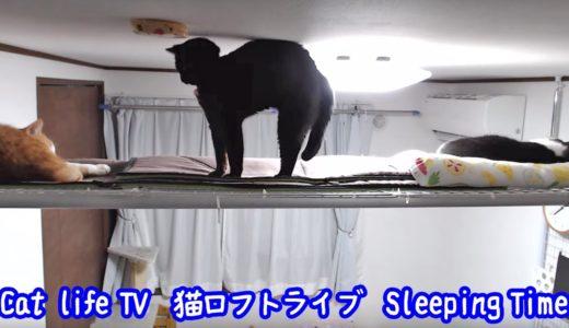 猫ロフトに集合!!お休みの時間💤 - Cat Life TV「2匹の猫通信」