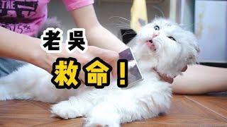 【李喜貓】3只长毛猫5天不梳毛变成小乞丐,毛都打结了还凶巴巴的:莫挨劳资
