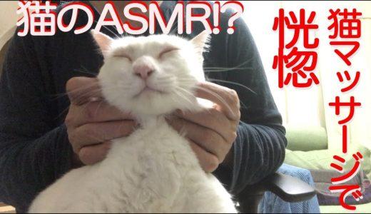 【猫ASMR?】膝上猫マッサージ、猫たちが恍惚となる Tha massage for my cats