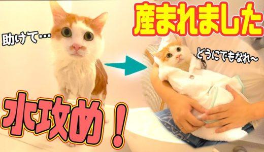 やんちゃな猫を水攻めしたら超大人しい子猫になっちゃったwww