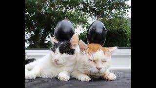 米なすのせ猫 190903