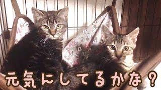 【里親だより】保護猫ポン・チーは実家に慣れたかな?
