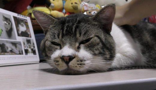 マジ寝する猫をまじまじ見てみる☆寝ぼけまなこが可愛い♥またもやランチョンマットに転送されるリキちゃん【リキちゃんねる 猫動画】Cat video キジトラ猫との暮らし