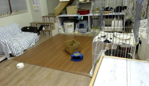 "2019/9/1 夜の保護猫ハウス Saved Cats' House ""Shinshu-Nekobiyori"" at night"