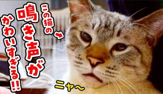 【大好評】猫のデュフィのかわいすぎる鳴き声集<第2弾>