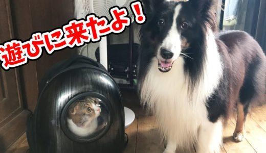 ママの実家に遊びに行く猫