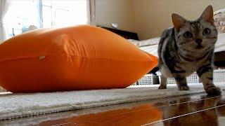 密室二人きりはダメな猫~ 人をダメにするソファにダメネコにされたことを悟られたくない猫 -Cat is Afraid of New Sofa