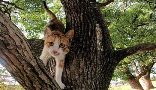 木に登る三毛猫を撮っていたら降りてきた。そしてなぜか集まってくる野良猫達