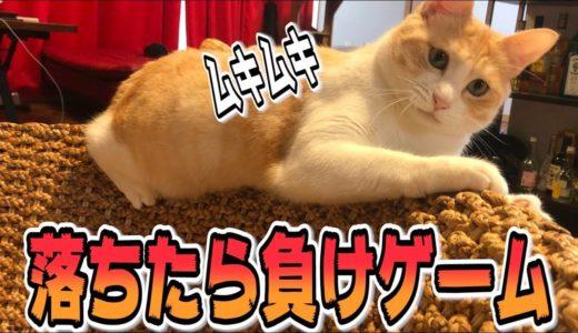普通の遊びに飽きた猫の縛りプレイ