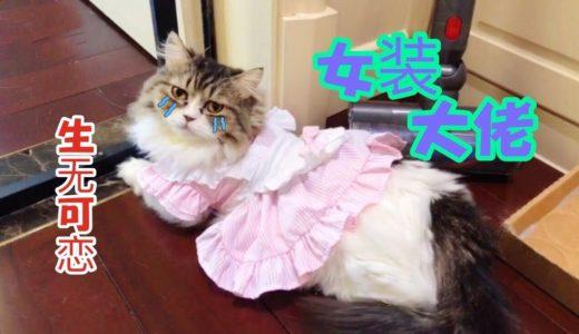 【李喜貓】主人给公猫穿上女仆装营业,小短腿快哭了:我们喵星人也是要脸的啊