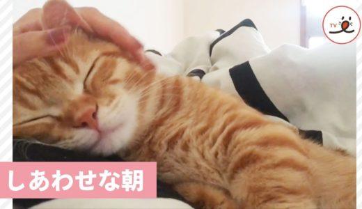 朝一番の甘えんぼさんタイム💓 猫さんが大好きなのは、やっぱりママの…👋【PECO TV】
