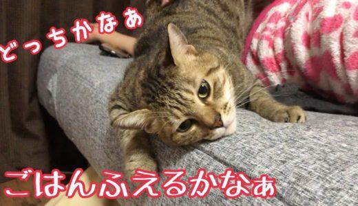 どっちの飼い主に甘えるか悩む猫w