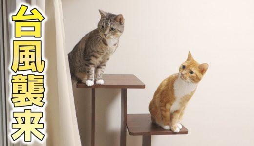 猫ズの台風へのリアクション。普段と違う天気にソワソワ、ワクワクしている猫ズ