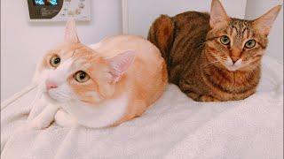 猫たちと一緒にお風呂でぶっちゃけ質問返し!
