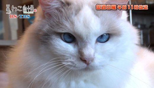 ねこ自慢#12ご出演ニャンコたち【9月8日OA】