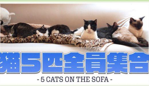 猫5匹全員集合
