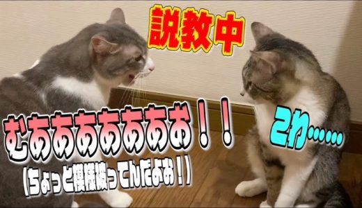 後輩猫に大音量で説教をかます猫